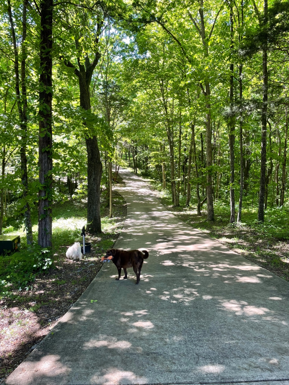 Afternoon walks with our furry friends, Zoey and Snowball, at the Sites home.