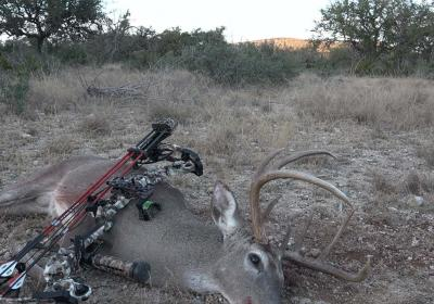 Jimmy Sites Tx 8 Point 2018 Copy 1200 1200