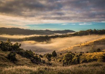 New Zealand North Island Foggy Valley 1200